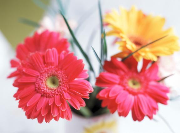 Υπάρχουν τρόποι να κρατήσεις τα λουλούδια σου ζωντανά στο βάζο περισσότερο