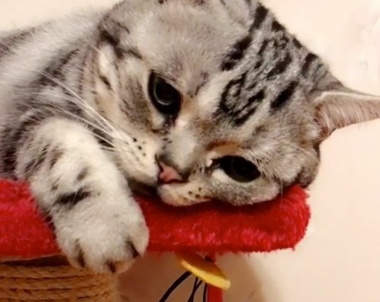 Viral: Η Μονίμως δυστυχισμένη γάτα που έγινε Star του instagram!