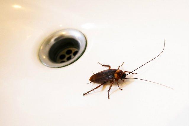 Σε επισκέπτονται τακτικά οι κατσαρίδες; Έτσι θα τις διώξεις από το σπίτι σου!