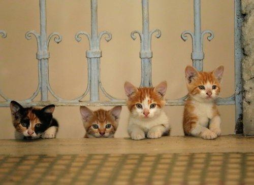 Οι Γάτες της Κωνσταντινούπολης / Nine Lives: Cats in Istanbul