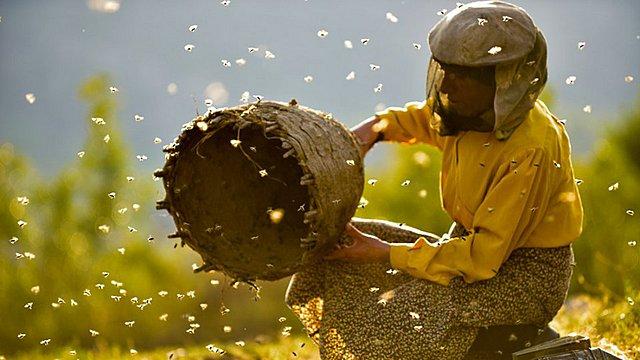 Ταινία της Εβδομαδας: Μετά το Σάντανς, τις Νύχτες Πρεμιέρας και τα Όσκαρ το «Honeyland» έρχεται να κεράσει κινηματογραφικό μέλι