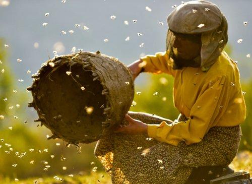 Η Γη του Μέλιτος / Honeyland