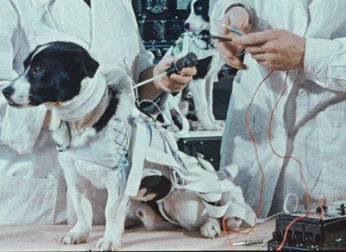ΟΙ ΣΚΥΛΟΙ ΤΟΥ ΔΙΑΣΤΗΜΑΤΟΣ / SPACE DOGS