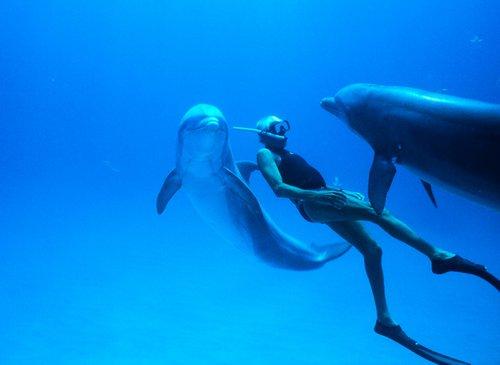 Σήμερα γιορτάζουμε την Παγκόσμια Ημέρα Γης με τη δωρεάν προβολή του βραβευμένου «Dolphin Man»